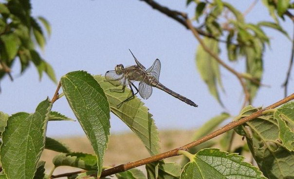 Dragonfly on Corfu