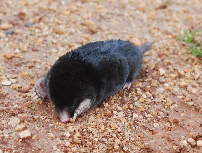 Moles on Corfu Island