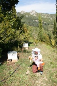 Natural-biodynamic-beekeeping