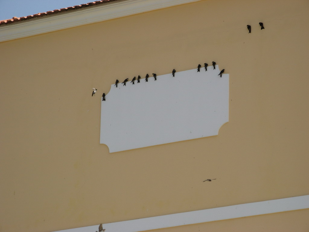 birds of corfu